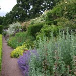 Planted Border Herbacious Perennials Gravel Path