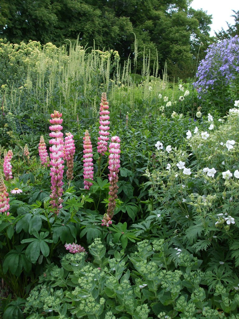 Planted Border Herbacious Perennials Gravel Path